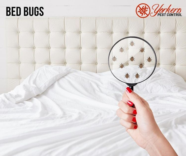 Yorkers Pest Control, specializ - yorkerspestcontrol | ello
