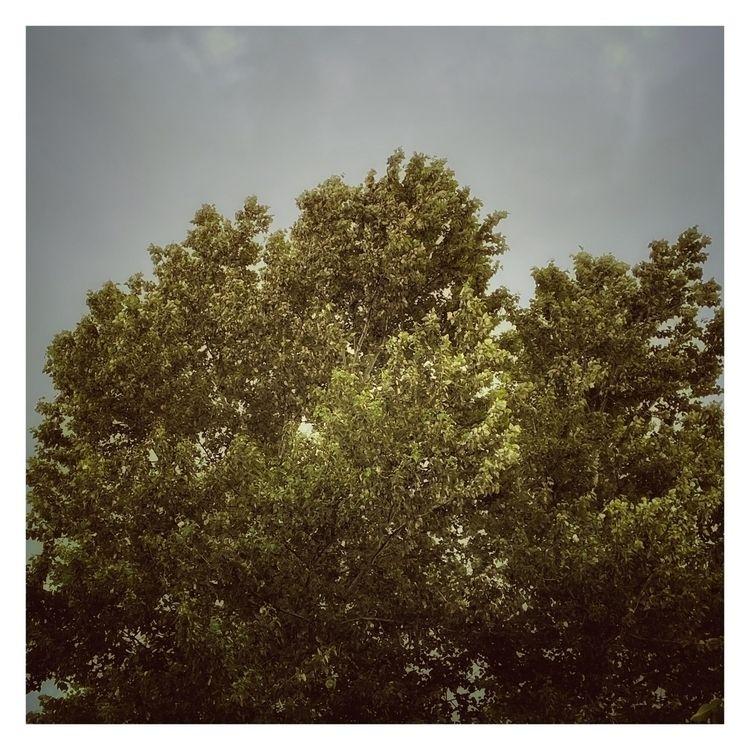 Silvery Light Trees - photography - davidhawkinsweeks | ello
