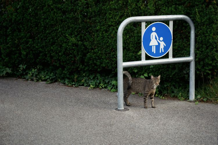 Anarchist - photography, cat, mischief - marcushammerschmitt   ello