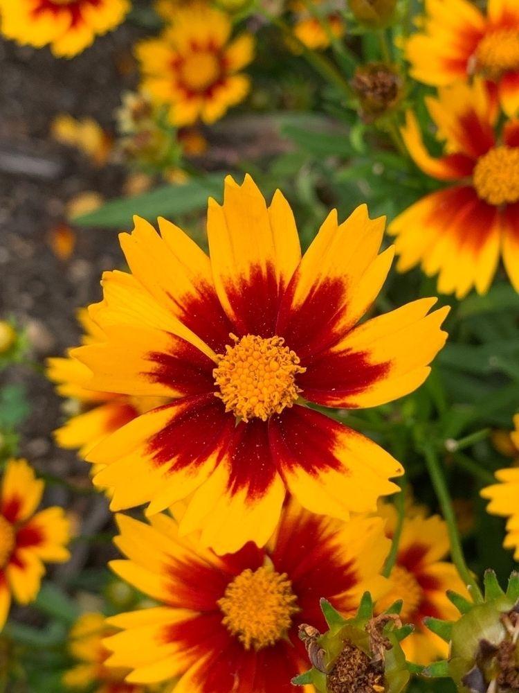 floral, botanical, flower, gardenbox - depressobean | ello