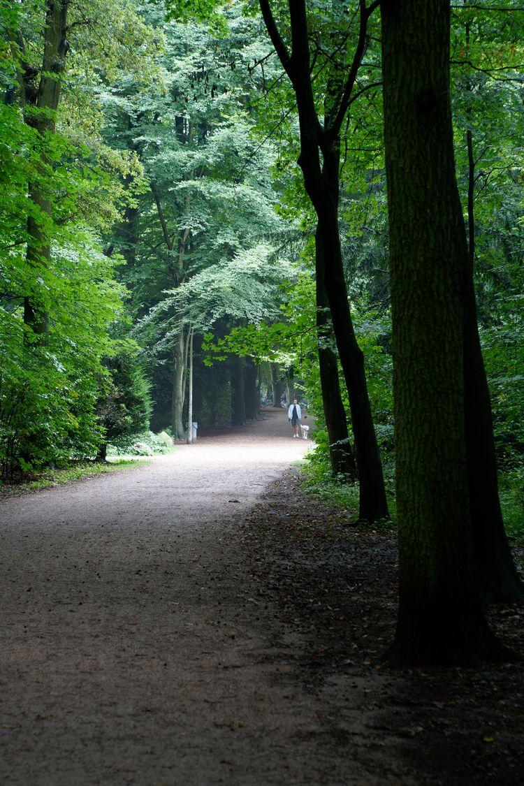 Urbanisme - photography, greenery - marcushammerschmitt | ello