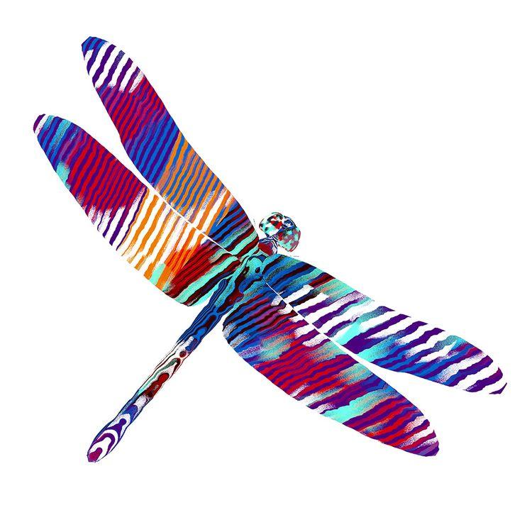 Dragonfly Dynamic, animated pro - chriskeegan | ello