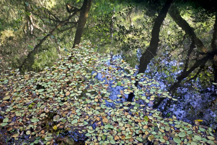 Mendocino, CA / August 31, 2021 - biosfear | ello