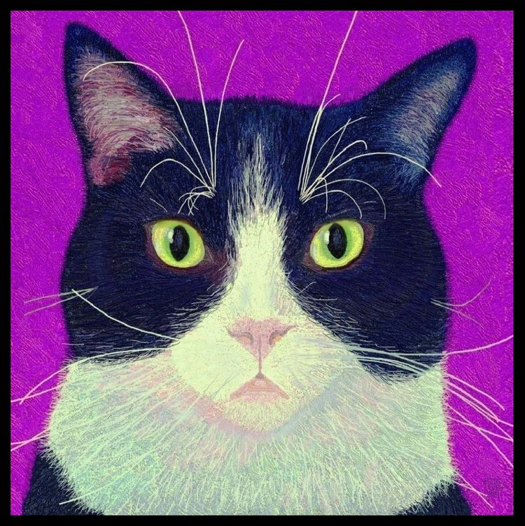 Prince - Cats - catsiknow, art, digital - rjayslais | ello