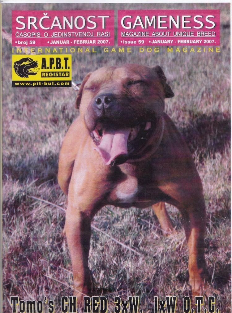 Watch Pitbull History >&gt - apbt-game-dogs | ello