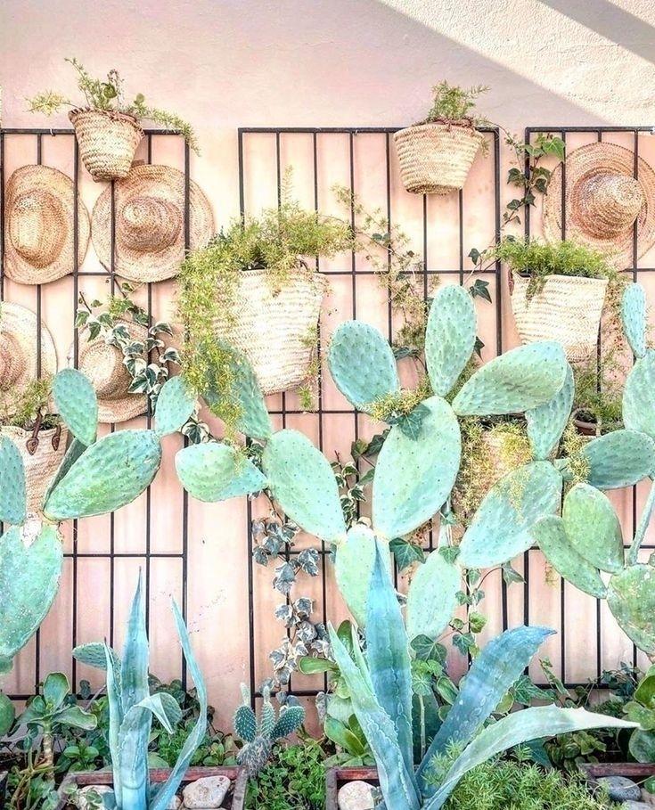 Tips Decorate Home Houseplants  - varnishandvine | ello