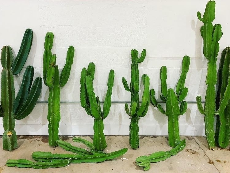 Properly Maintain House Plants  - varnishandvine | ello