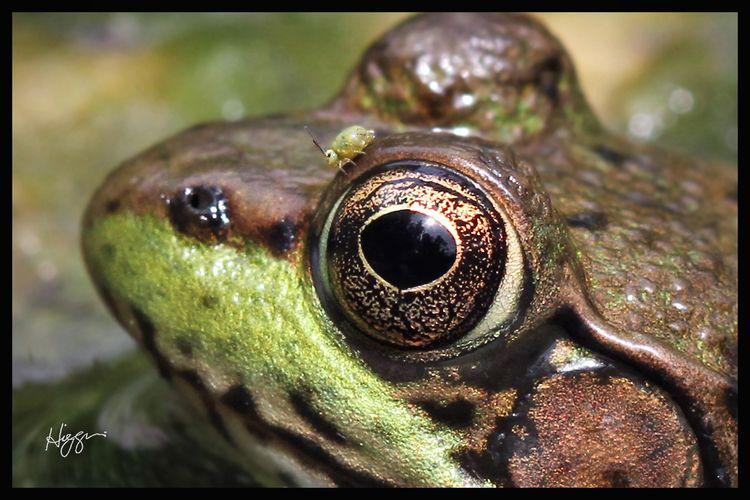 Bug-Eyed - jeffreyearl   ello