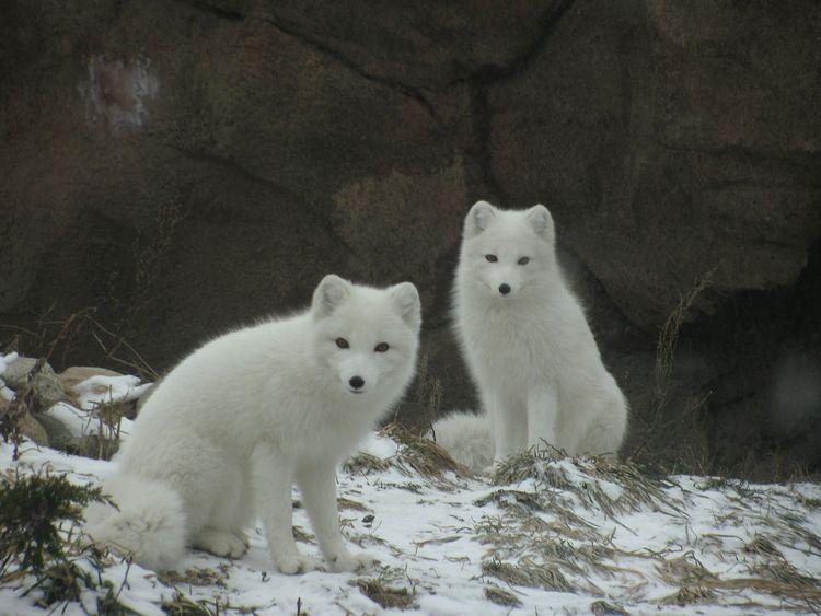 Top 7 Interesting Facts Arctic  - vibhanshu_goyal | ello