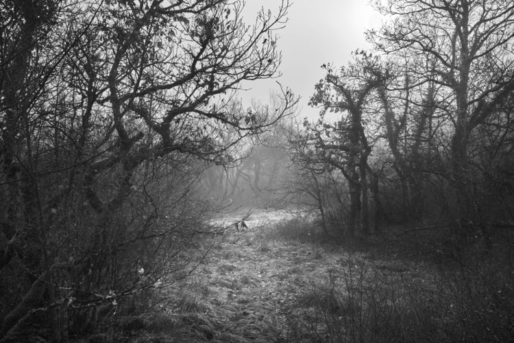 Ivan Friedman white garden.jpg