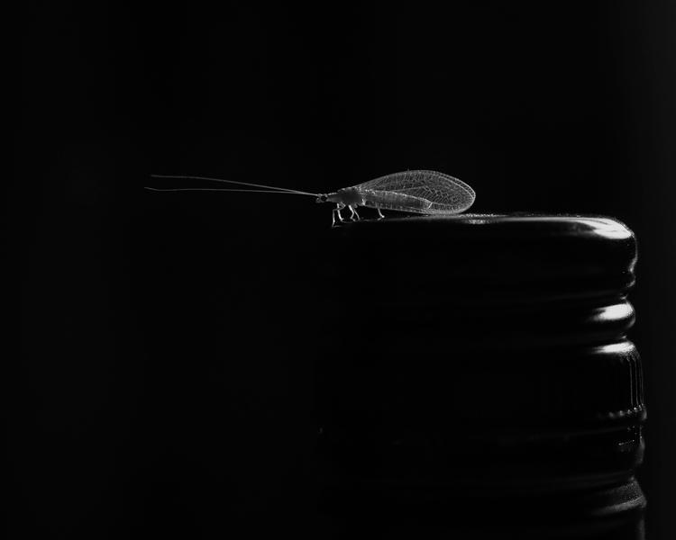 latticewingandbottle-danielpurvis-2016.jpg