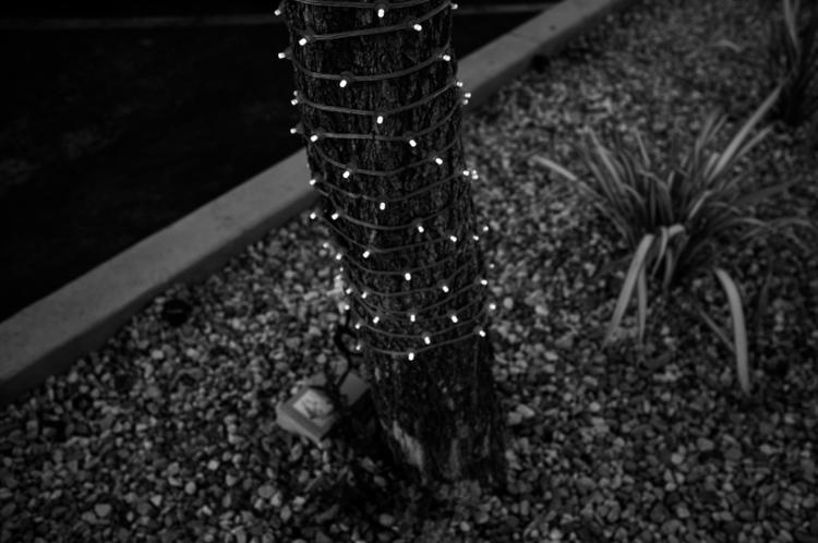 02.06.16.Santa.Monica (3 of 5).jpg