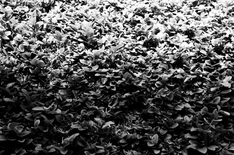 02.06.16.Santa.Monica (1 of 1).jpg