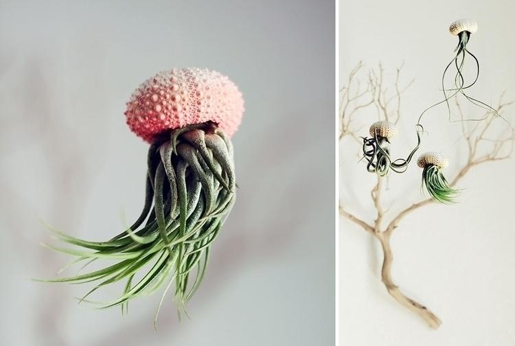 great-funny-crazy-modern-plant-pot-planter-ideas-4.jpg