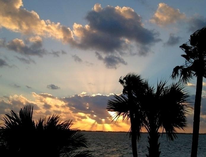 Palm Trees Sunrise Photo Pop.jpg