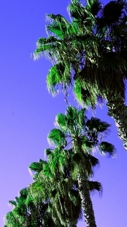 Afternoon in California-sm.jpg