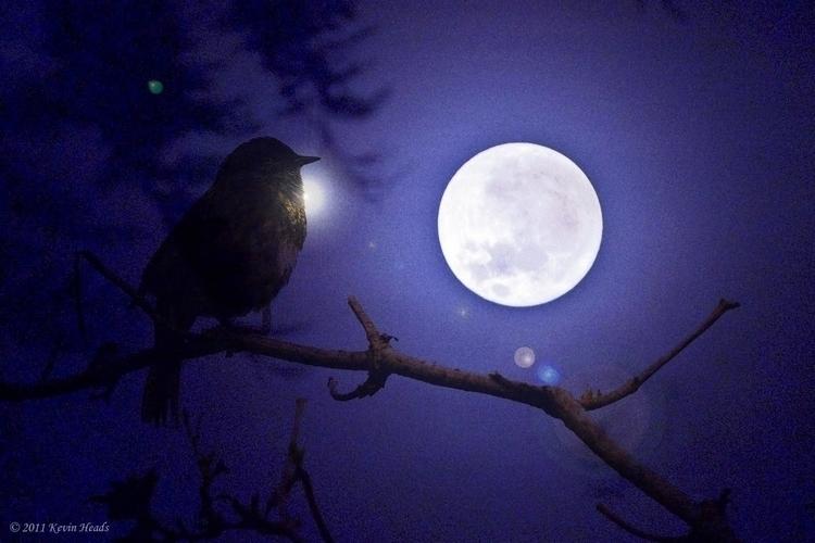 MoonBird.jpg