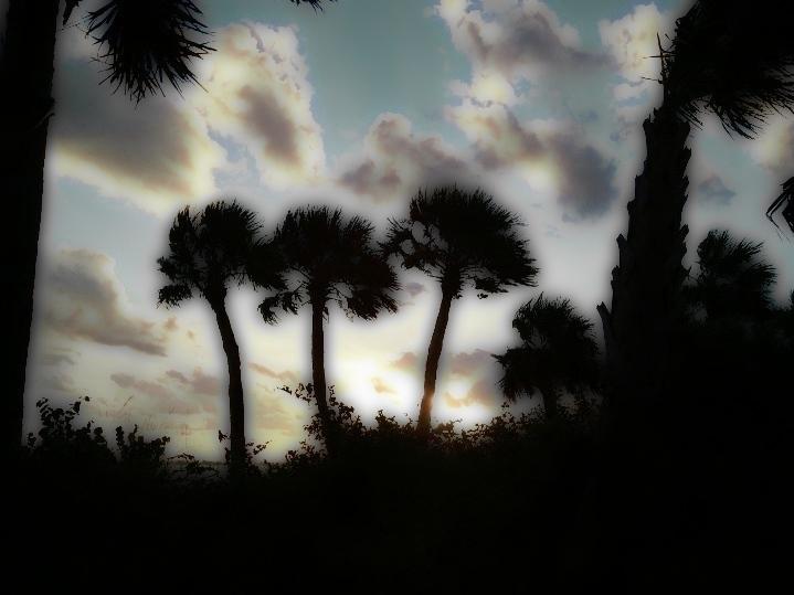 Palm Trees adjusted.jpg