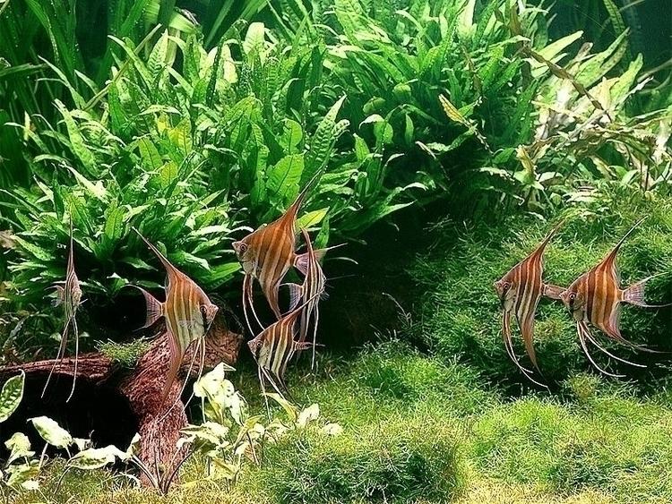 Nature Aquarium Galleries by Takashi Amano .jpg
