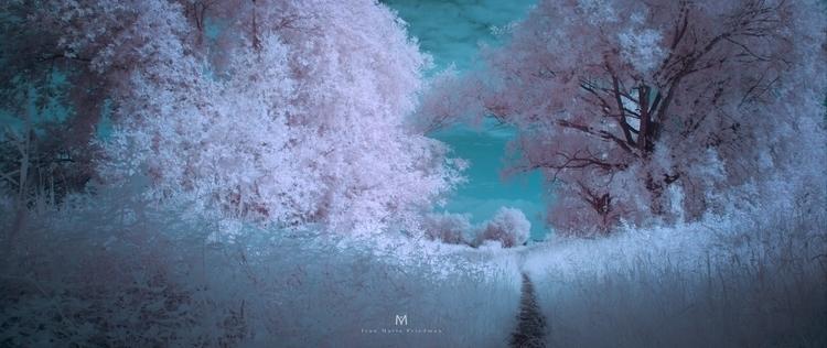 ivan friedman ir forest beautifull_1.42.2.jpg
