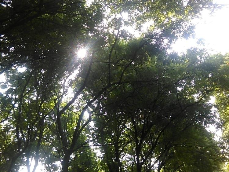 Sun and Shine.jpg