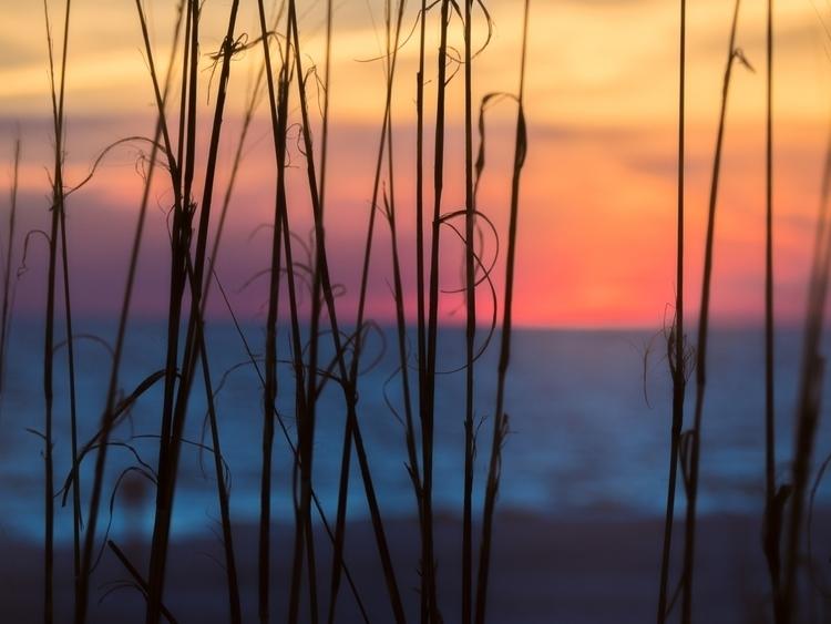 grassy sunset-1.jpg