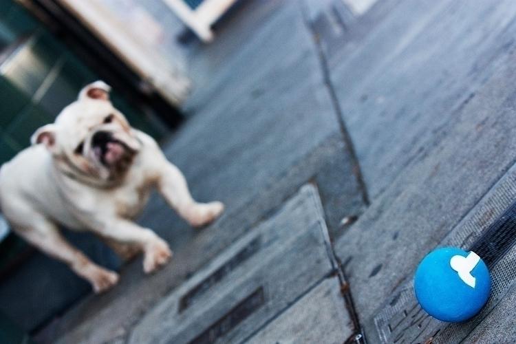 boxer dog with gooddler1.jpg