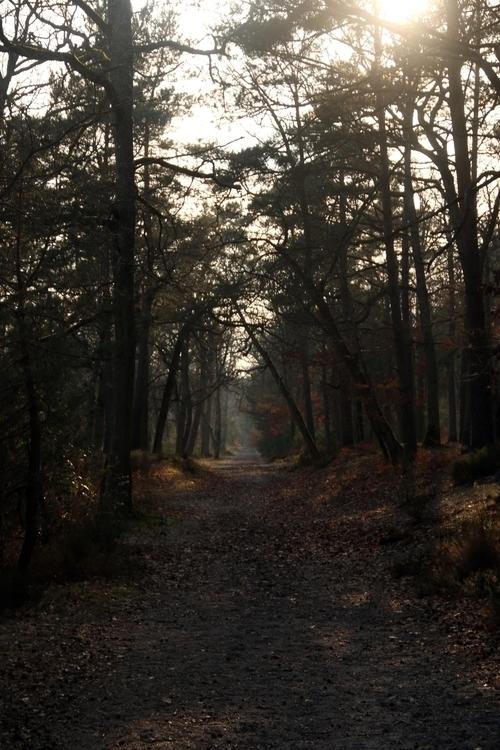 Forest fountainbleu.jpg
