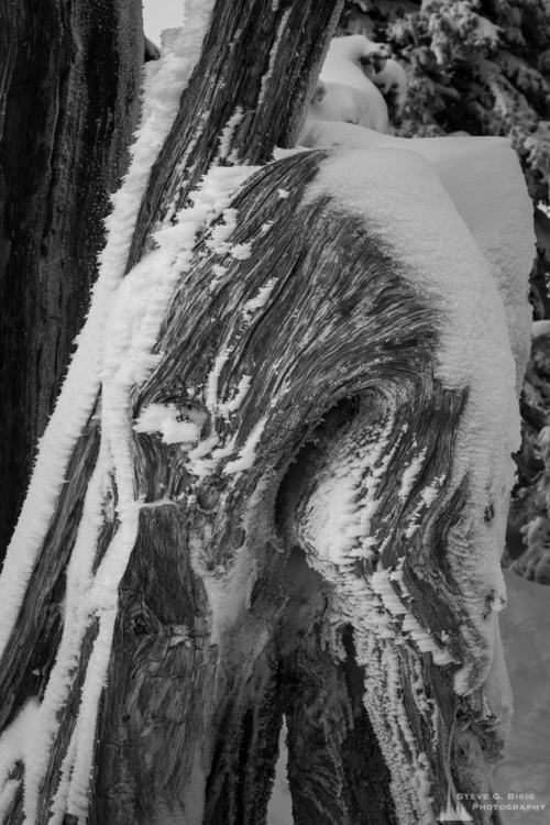 frozen-stump-hurricane-ridge-washington-2016.jpg