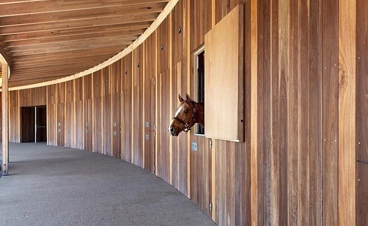 04_horsey.jpg
