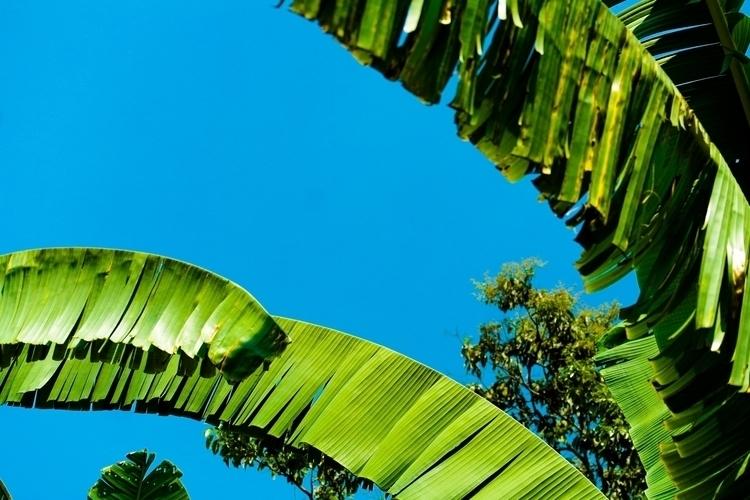 10 Palmtree.jpg