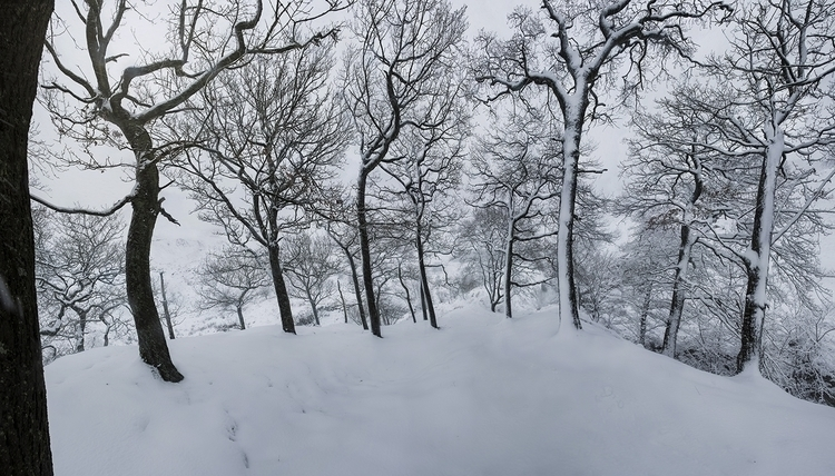 SnowWoodsLargeSocial.jpg