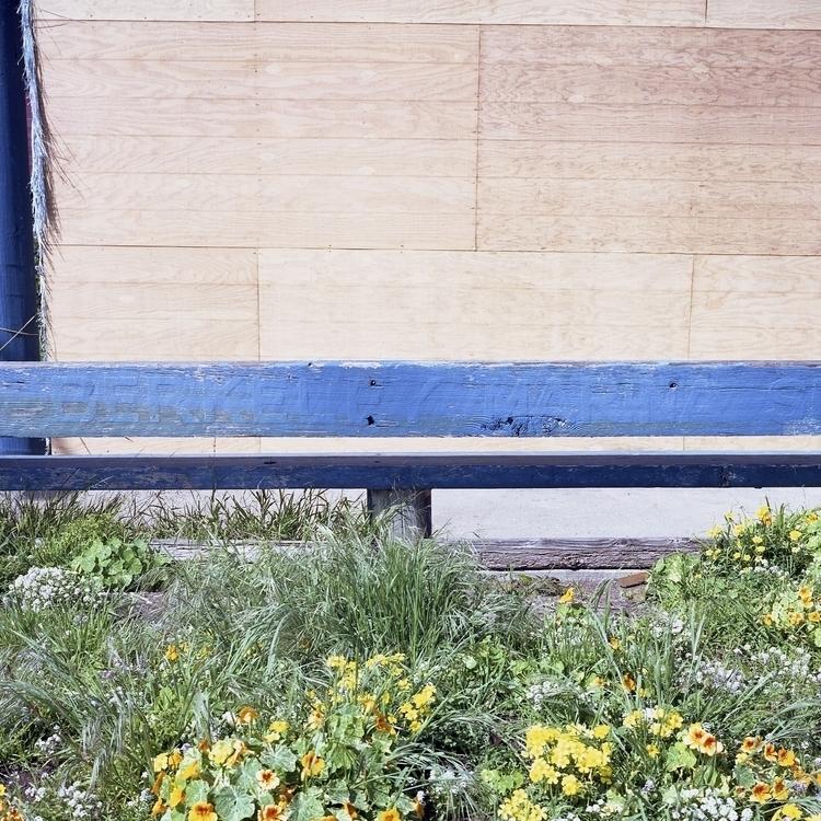 berkeley-marina-spring