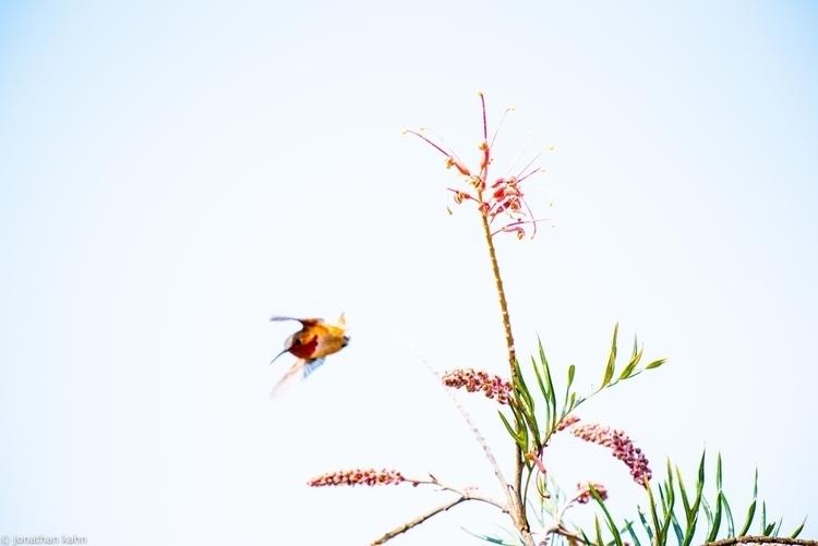 Hummingbirds in white.jpg