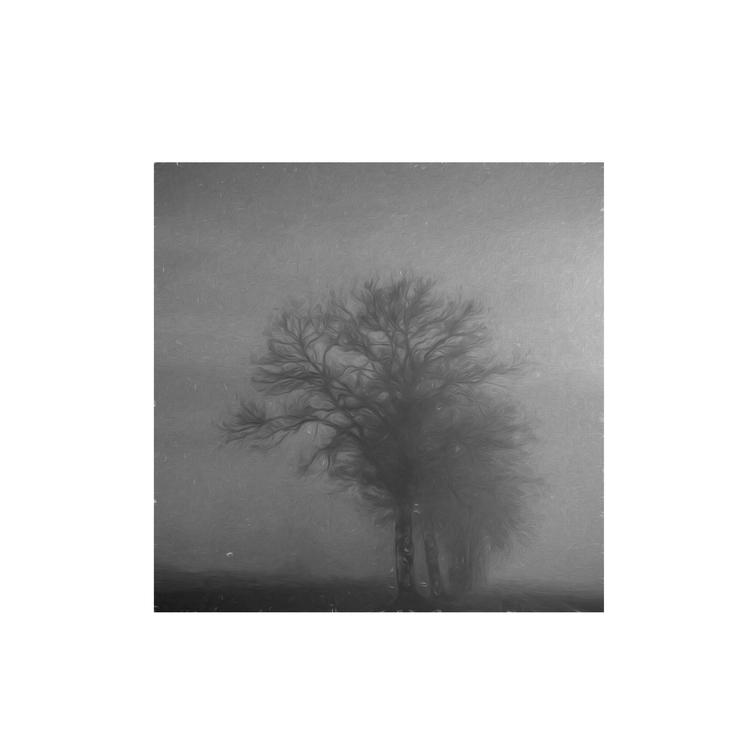 bomen19.jpg