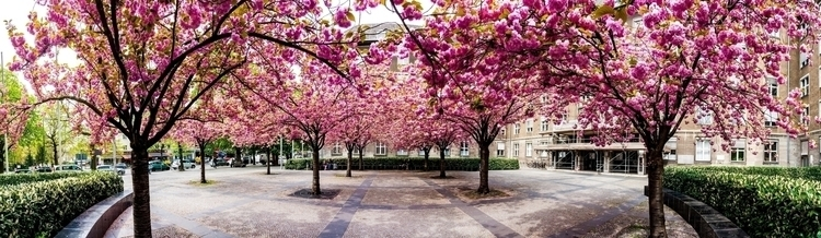 Robert Emmerich - 46 PAN - The cherry blossom No. 6 in Berlin - Germany.jpg
