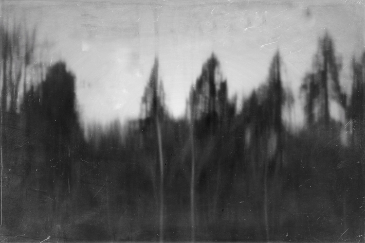Pinhole slit trees window - katznjamn31545 | ello
