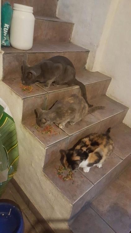 Gatos,gatos,gatos - jotacefer | ello