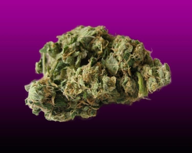 Azura Haze cannabis cropkingsee - cropkingseeds   ello