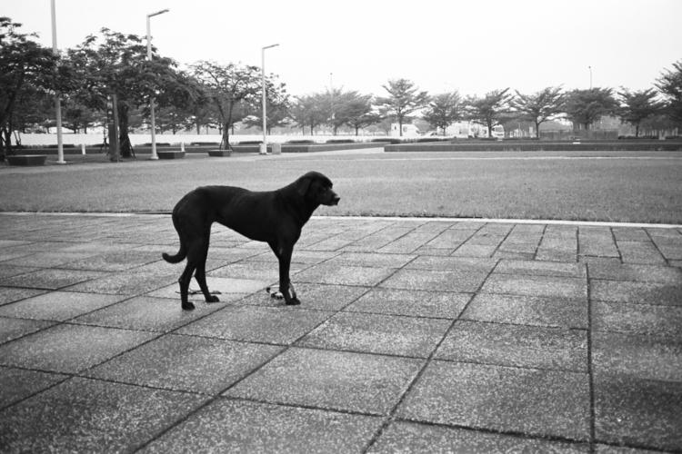 dream dog night stray, limping  - kappuru | ello