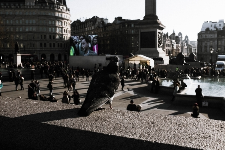 Pigeon Hood LDN streetphotograp - liamjoseph | ello