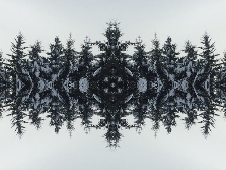 Snow trees - trillianmann | ello