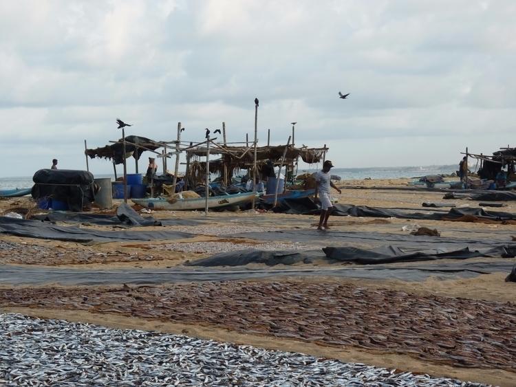 Fish Market ! Negombo, Sri Lank - colinegilles | ello
