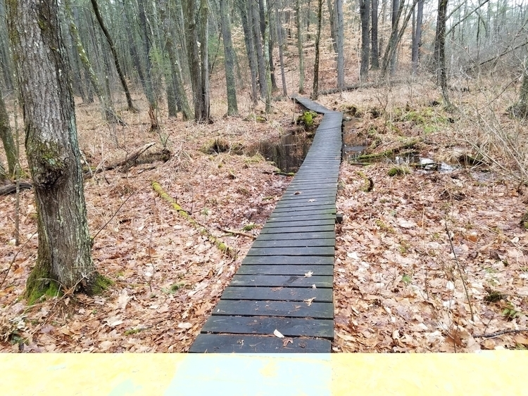 A path swamp Great Brook Farm S - crowguided | ello