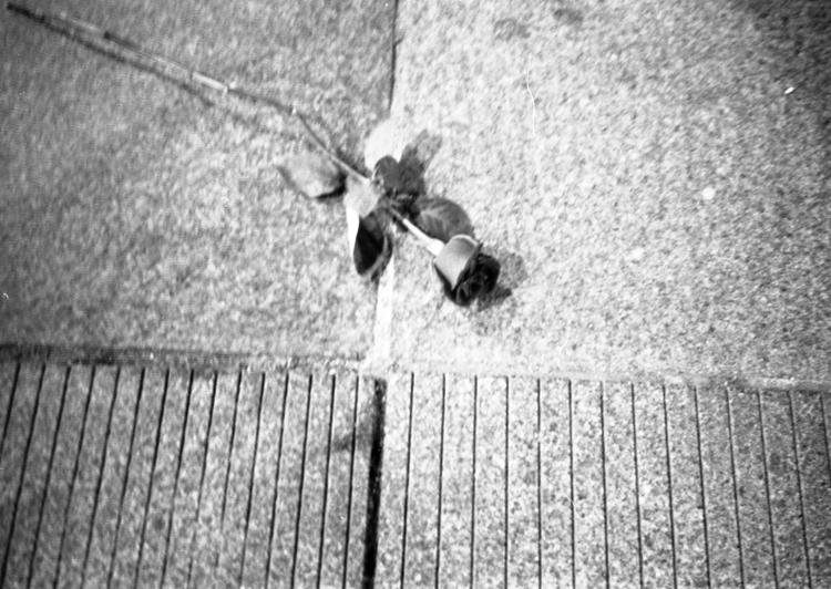 Rose parade 35mm film ilfordhp5 - shiraroth | ello