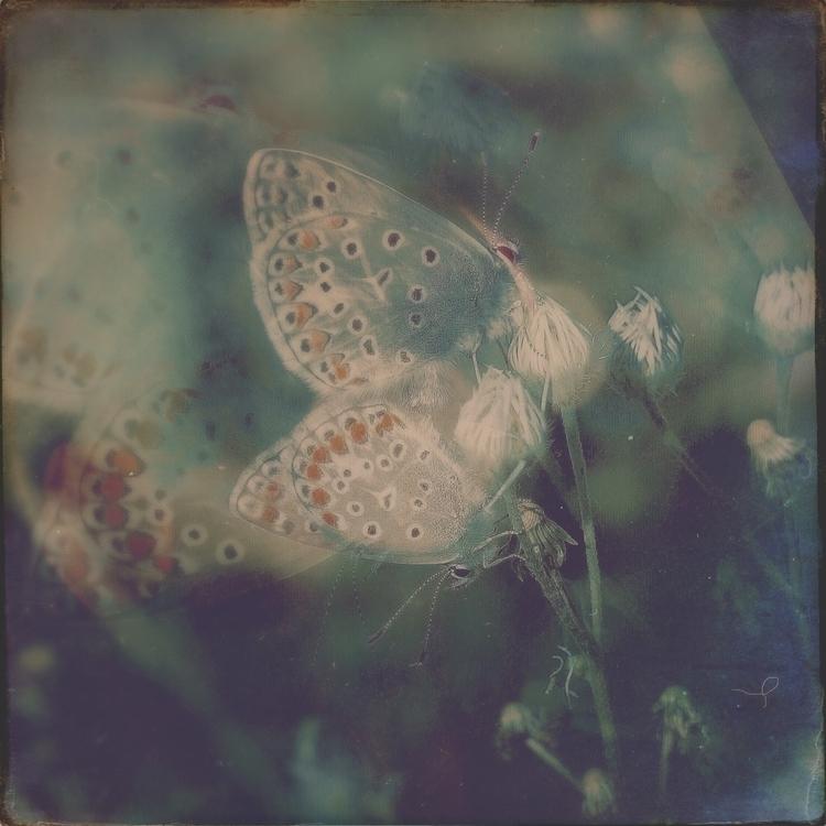 iphonephotography insects - treibgut | ello
