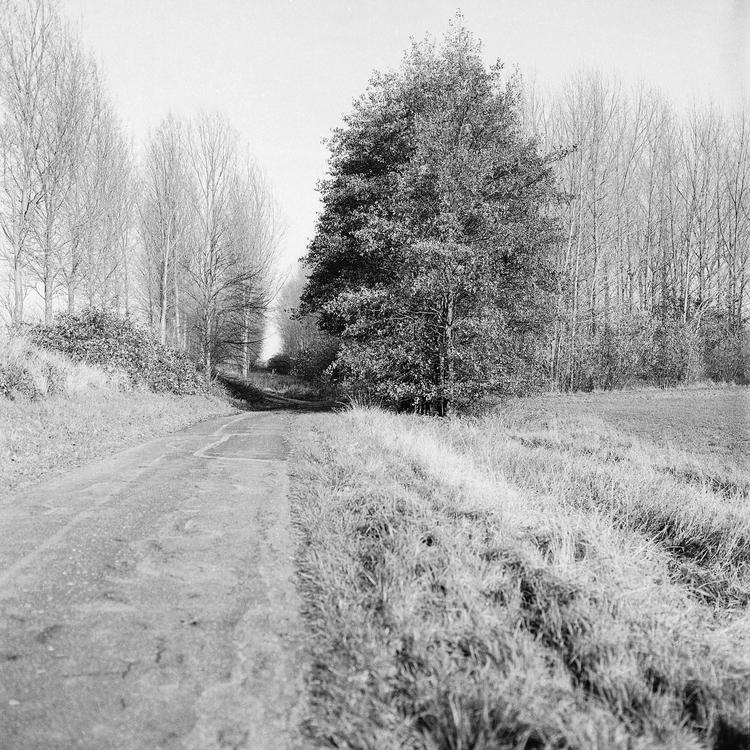 Land-water-trees photography fi - glennvanvredegem | ello