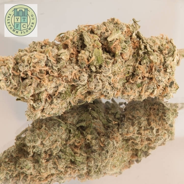 "Double trouble, A monster nug "" - ytfc 