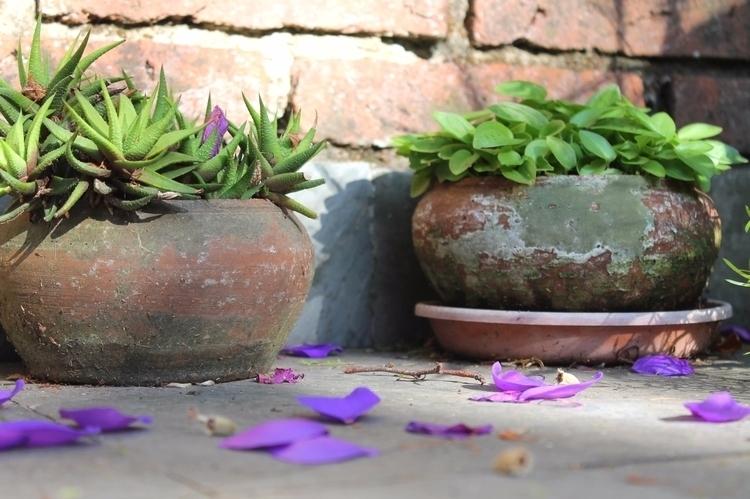violetas macetas, feb 016 - vraggio | ello