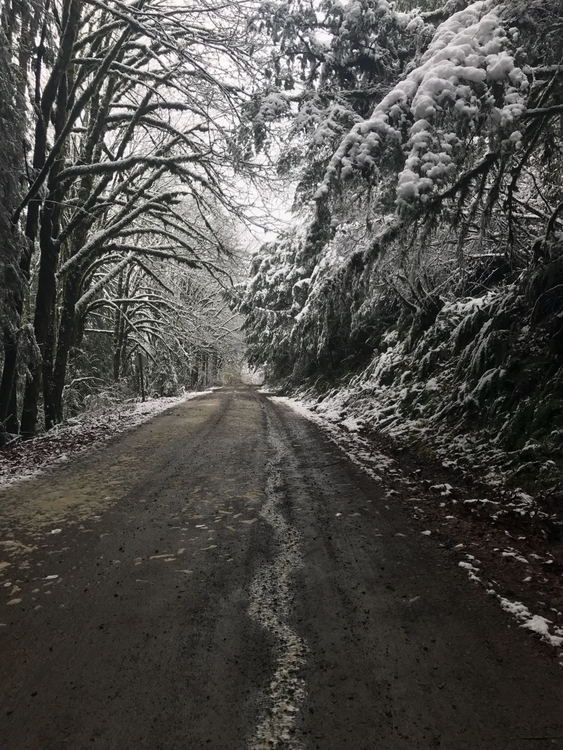 Rare Pacific NW snow. Photos 12 - philip_higgins | ello